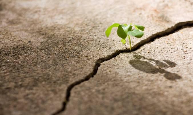 plant-growing-through-crack-in-concrete2