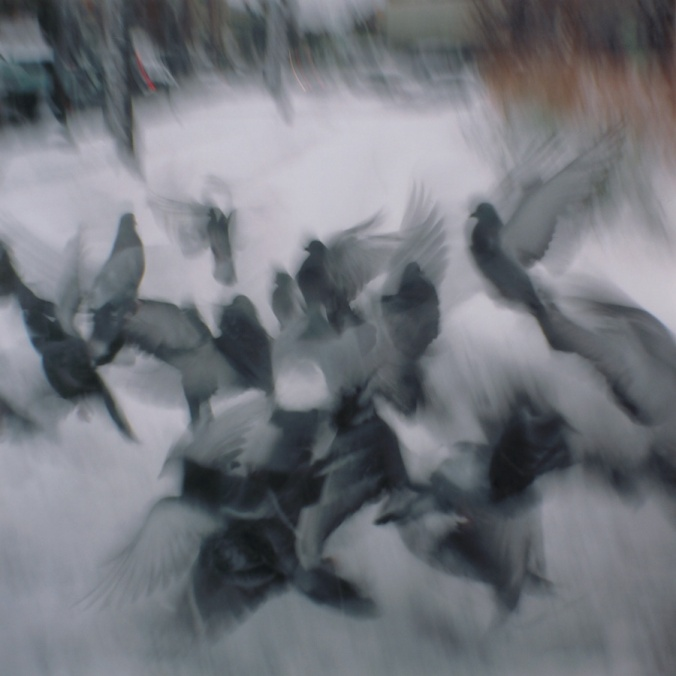 pigeons-with-holga-flying-in-boston
