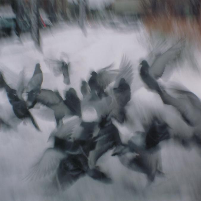 pigeons-with-holga-flying-in-boston